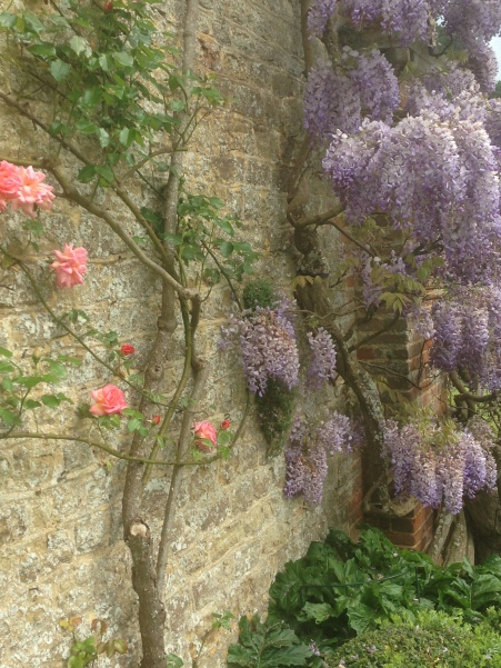 wisteria and roses grace a wall at Chilworth Manor
