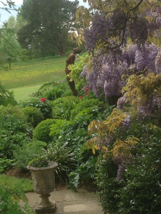 Wisteria at Chilworth Manor, Surrey