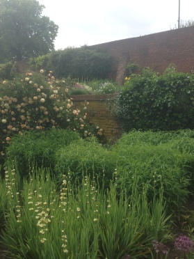 Sisyrinchium Striatium and Roses dominating the beds at Hall Place.