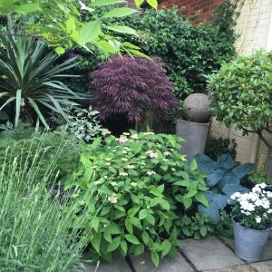 A densely planted courtyard garden