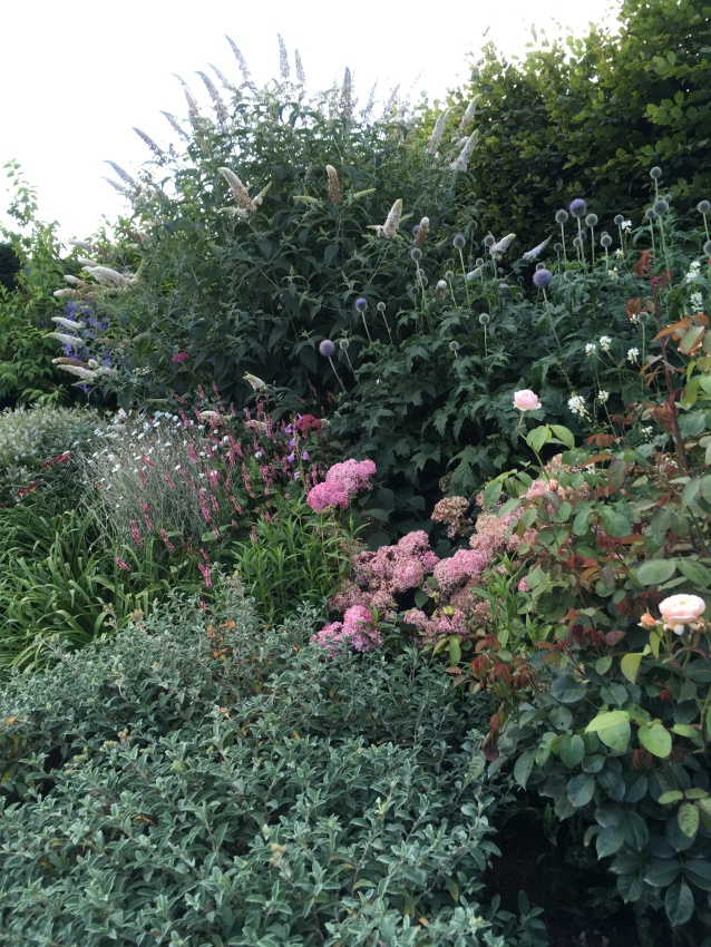 mixed planting in flower border