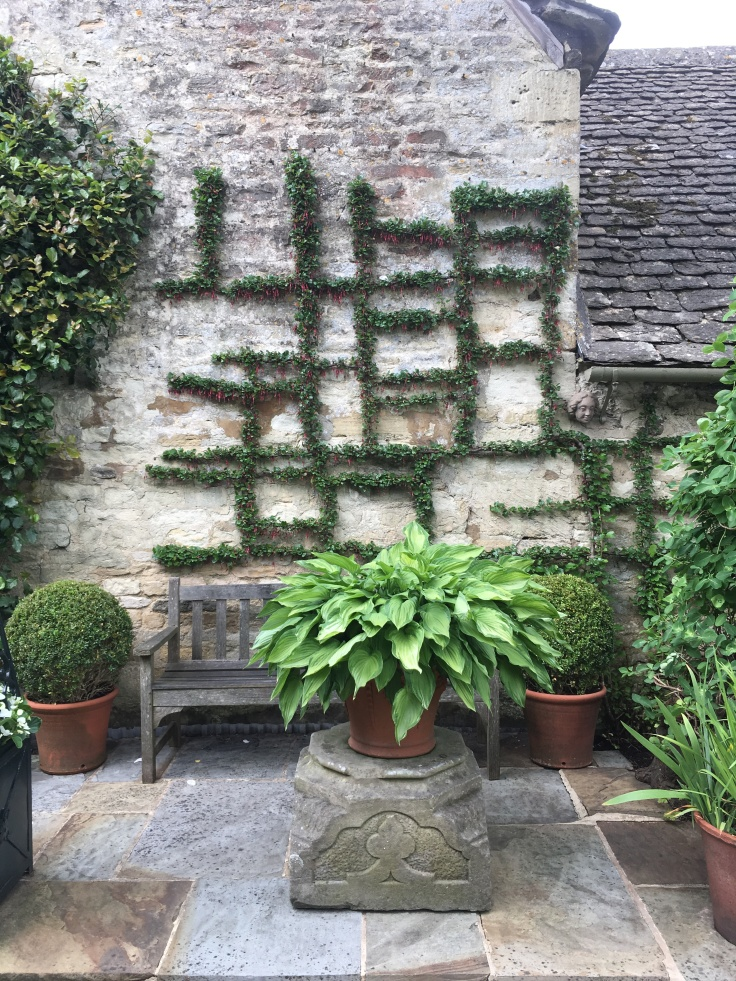 Ribes speciosum trained against a stone wall