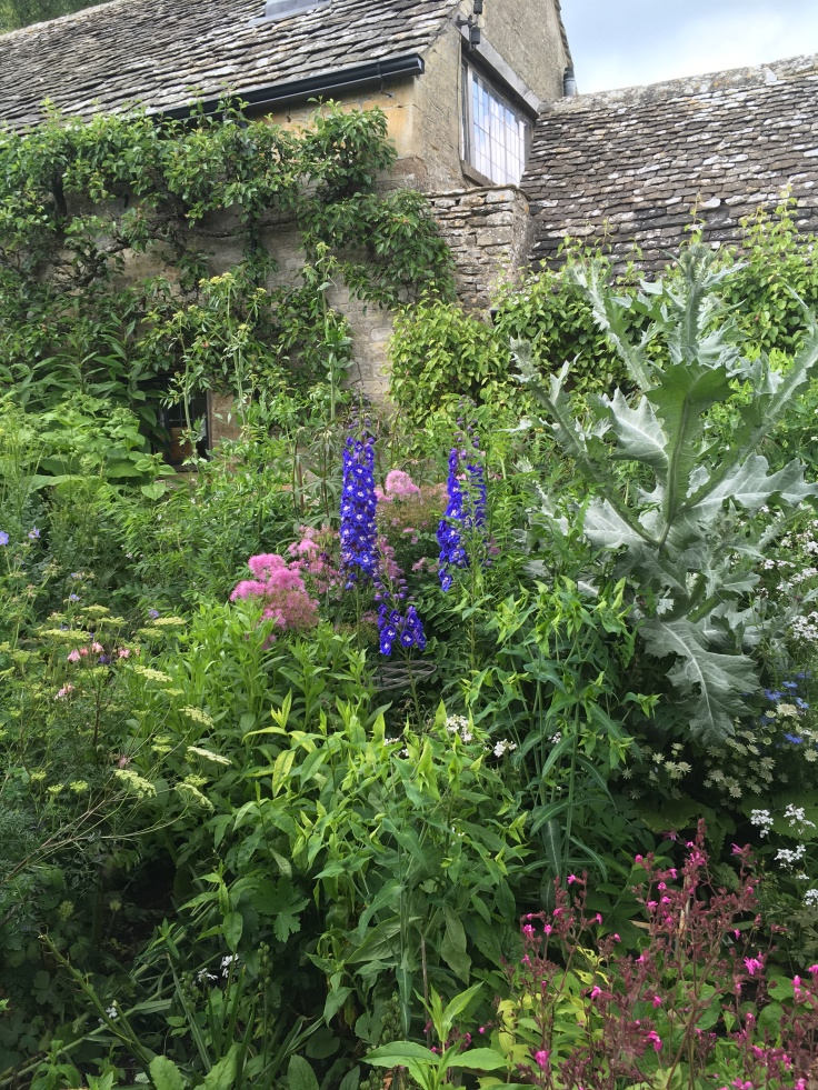 densely packed border with delphiniums