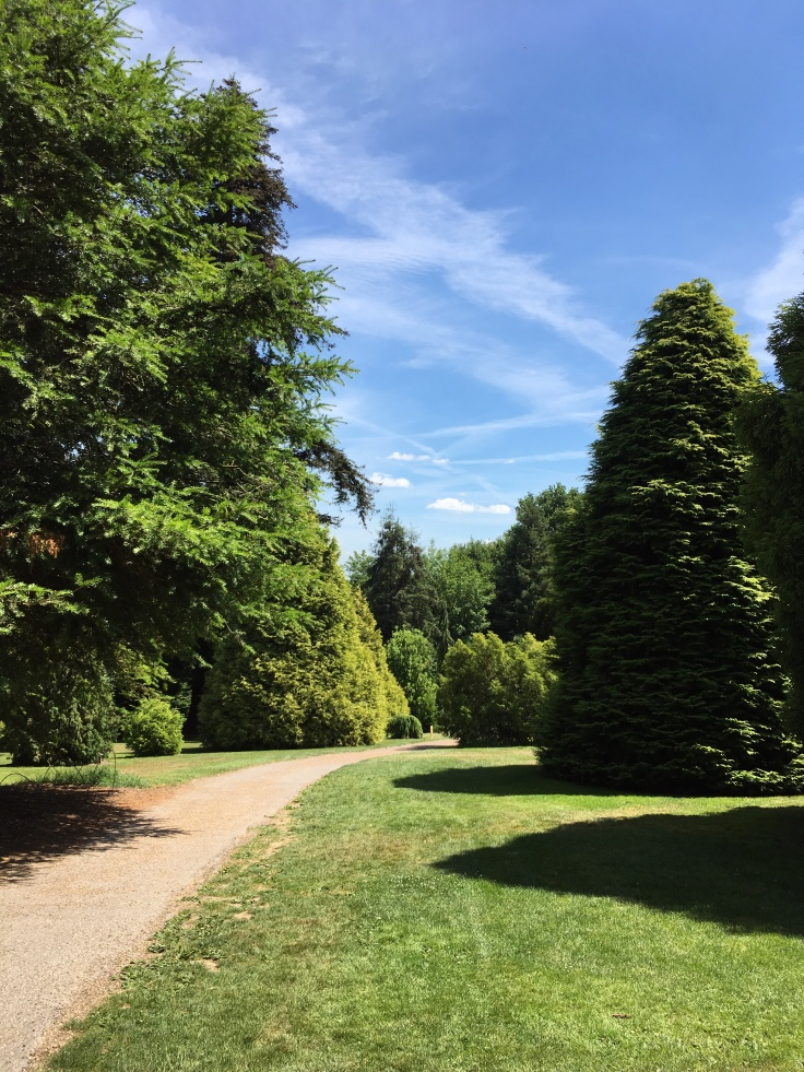 A wide gravel path sweeps through the pinetum