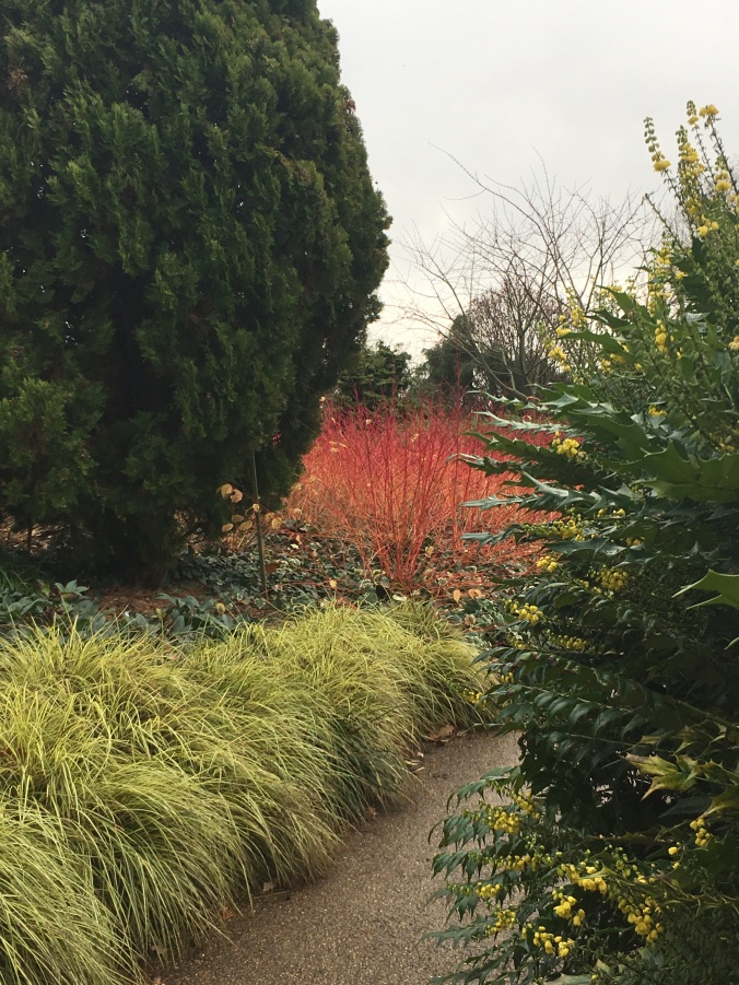 Bursts of winter colour at The Savill Garden