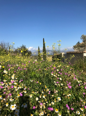 Corfu roadside - wild flowers beside the road