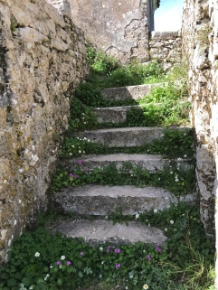wild daisies carpeting an abandoned staircase at Old Perithia