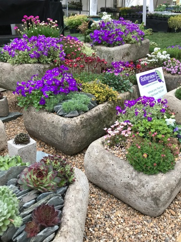 Alpines on the Rotherview Nurseries stand