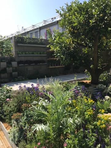 Ingenious planting ideas in the Lemon Tree Trust Garden