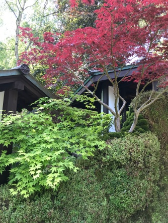 Mosses and Maples abound in the O-mo-te-na-shi no NIWA garden