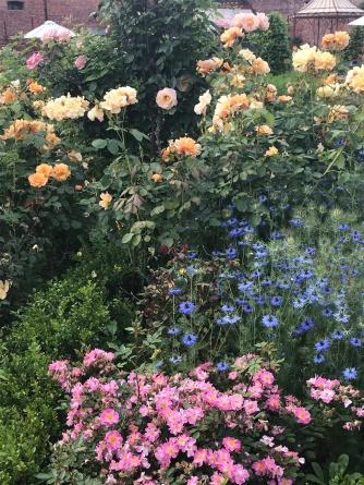 Frothy, abundant planting