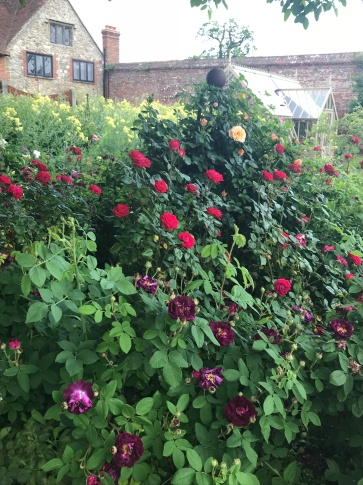 Roses galore!
